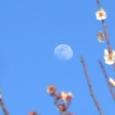 薄明かりの月